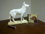 Dog Acupuncture Model+Acupuncture Laser+Dog Chiropractic DVD